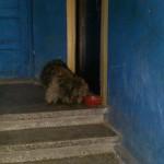 Katės ir šunys daugiabučių laiptinėse-ar tai normalu?