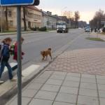 Būkite atsargūs, šiuo metu Pagėgiuose laksto nuo grandinės nusitraukęs šuo