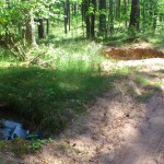 Pagėgių miškai: statybininkai kasa duobes, šaltkalviai laidoja šiukšles