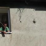 Šilutės butų ūkio administruojamuose daugiabučiuose sėkmingai kuriasi vabzdžiai
