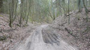 Sugadintas miško kelias