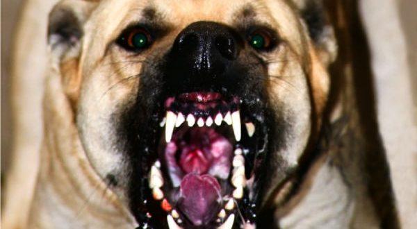Pasekmė gyvenimo tarp šunų - dešimtys prarastų sveikų gyvenimo metų.