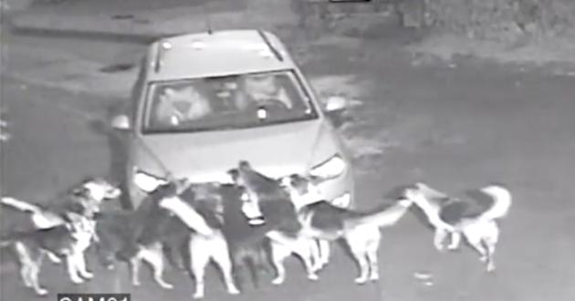 Ginkluoto konflikto atveju taikūs gyventojai tampa išbadėjusių šunų įkaitais. Ukrainos pavyzdys ir perspėjimas lietuviams.