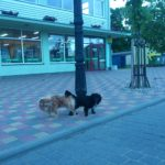 Piliečių iniciatyva Seimui: kuo skubiau turėtų būti grąžinta prievolė registruoti šunis ir kates.