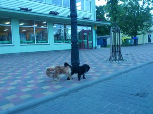 Du šunys