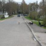 Seimo peticijų komisija nagrinės D.Jančaro peticiją dėl privalomo šunų ir kačių registravimo grąžinimo į gyvūnų registrą.