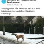Iššūkis raudondvariečiams- nusigauti iki namų neužpultam šunų