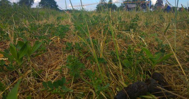 """NATO kariai pratybose Kulautuvoje brido per šunų paliktas """"minas"""""""