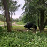 Naujas turistų traukos centras Kauno rajone- didžiulis šernas iš smalos