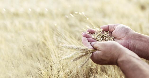 349 ūkininkai privalės grąžinti beveik pusę milijono eurų gautos paramos