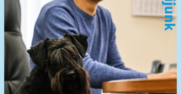 Susisiekimo ministerijos darbuotojai į darbą prisivedė šunų