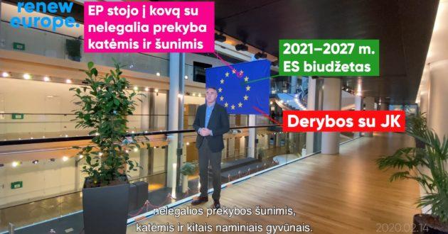 P.Auštrevičius: nelegali šunų prekyba trečias biznis po narkotikų ir prostitucijos(video)