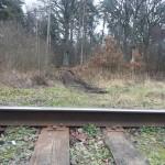 Pagėgių miške slaptas privažiavimas prie geležinkelio bėgių, kas juo naudojasi?