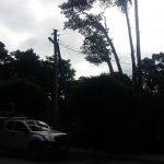 Lūžusi pušis dalį Kulautuvos gyventojų paliko be elektros