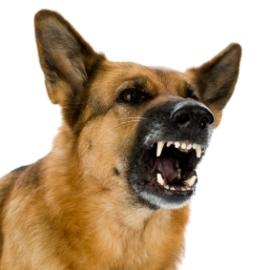 Šunų savininkai turėtų suklusti, jų augintiniai pripažinti triukšmą keliančiais ir skleidžiančiais objektais.