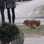 Už valkataujančių šunų ir kačių gaudymą Kauno rajono savivaldybė išleis 75 tūkst.Eur.